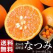 ≪送料無料≫柑橘 愛知・蒲郡産 『な...