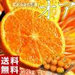 神秘の柑橘 オアオレンジ イスラ...