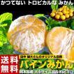 柑橘 みかん 熊本県産 田中雄大さん...