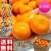 柑橘 みかん 佐賀県産 JAからつ 小...