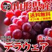【あすつく対応/出荷中】山形県産 ブドウ デラウェア 2kg(秀品/8房〜16房)