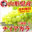 【出荷中/日時指定OK】山形県産 ブドウ ナイアガラ 2kg(ご家庭用/3房〜10房)