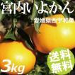 宮内いよかん 3kg 10〜15玉 愛媛県西宇和産 送料無料 贈答品 お取り寄せ