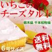 タルト いちご チーズ 誕生日 ギフト 6号 とちおとめ 千本松牧場 栃木県那須 国産 送料無料 贈答品 お取り寄せ