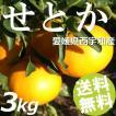せとか 3kg 10〜13玉 愛媛県西宇和産 送料無料 贈答品 お取り寄せ