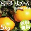 宮内いよかん 5kg 15〜20玉 愛媛県西宇和産 送料無料 贈答品 お取り寄せ