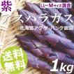 紫アスパラガス 1kg 2L〜Mサイズ混合 北海道 アグ・デ・パンケ農園 送料無料 贈答品 お取り寄せ ※ご予約商品※5月20日頃から順次お届け※