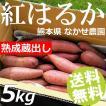 さつまいも 5kg M-Sサイズ 20〜25本入 紅はるか ベニーモ 熟成蔵出し 熊本県 なかせ農園 送料無料 お歳暮 母の日 敬老の日 贈答品 お取り寄せ
