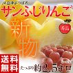 りんご リンゴ JA 会津 よつば サンふじ 約2.5kg 7〜12玉 秀品 常温 送料無料