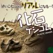 化石ケシゴム(シード)