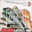 【送料無料】鮮魚30年のプロ厳選!相模湾おまかせ地魚セット5,980円(税別)