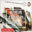 【送料無料】鮮魚30年のプロ厳選!!相模湾おまかせ地魚セットお試し2,980円(税別)