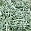 アメリカンチモシー1番刈り牧草 500g × 2