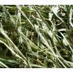 アメリカンチモシー2番刈り牧草  ダブルプレス 500g × 2