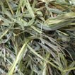 カナダチモシー 2番刈り牧草  ダブルプレス 500g
