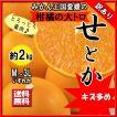 せとか 訳あり 家庭用 キズ多め 愛媛県産 柑橘の大トロ M〜3L 約2kg 送料無料