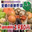 福袋 愛媛のお楽しみ野菜セット デラックス☆ 15品 ♪ 送料無料!!