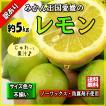 レモン 訳あり 愛媛県産 新物 檸檬 ノーワックス 防腐剤不使用 不揃い 5kg 送料無料 セール