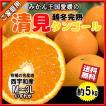 清見オレンジ 清見タンゴール 清見 清見みかん みかん 約5kg 家庭用 送料無料