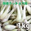 野菜・種/苗 国産ラッキョウ・生もの種 量り売り1kg