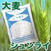 野菜の種/種子 大麦・シュンライ 1kg