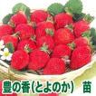 果物の苗 豊の香(とよのか)・いちご苗 4ポット入りセット