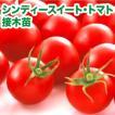 野菜の苗 シンディースイート・トマト 接木苗 4ポット入りセット