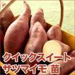 野菜の苗 クイックスイート・サツマイモ さつま サツマ 苗 20本入り