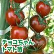 野菜の苗 栄養戦隊サプリガールズ チョコちゃん・トマト 苗 4ポット入りセット/9cmポット