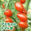 野菜の苗 栄養戦隊サプリガールズ アミちゃん・トマト 苗 4ポット入りセット/9cmポット