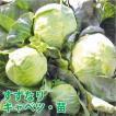 野菜の苗 すずなりキャベツ・キャベツ 苗 4ポット入...