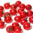 野菜の種/種子 キャロルスター・ミニトマト 1000粒(メール便発送/大袋)サカタのタネ 種苗