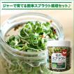 私のスプラウト ジャー栽培セット(ブロッコリー&ラディッシュ スプラウト種子付セット)
