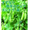 野菜の苗 すずなり肉厚スナップ エンドウ苗 4ポット入りセット