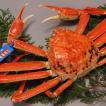 鳥取県 松葉かに 500gカニ 蟹 お取り寄せ お土産 ギフト プレゼント 特産品 名物商品 父の日