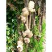 りすの置物 木登りリス3匹セット N122 動物 オーナメント ガーデン オブジェ 庭 置物 雑貨