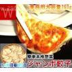 餃子 ジャンボ餃子 パーティー バーベキュー BBQ 業務用 お弁当 お弁当グッズ 弁当 夕食 38g×20個=760g