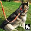 犬 リード 犬用 リード 伸縮リード ロングリード ハンドル付き 大型犬 中型犬 小型犬 トレーニング 犬のリード のび〜るリード