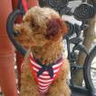 海辺をお散歩したくなるマリンボーダーペットハ−ネス♪犬のハーネスとリードのセット【Easy Go Sailor_レッド】胴輪/お散歩犬用品