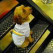 犬のTシャツ【No Worries】ペット用Tシャツ/犬服/犬の洋服/ペット服
