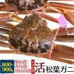 活 生 松葉ガニ 約800〜900g ズワイガニ 獲れたて 限定販売 蟹 カニ かに 生きたままお届け