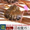 活松葉ガニ 700g前後 禁漁期間中のため水槽分のみ 限定販売 蟹 カニ かに 生きたままお届け