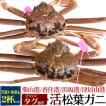 活松葉ガニ 700g前後 2杯セット 禁漁期間中のため水槽分のみ 限定販売 蟹 カニ かに 生きたままお届け