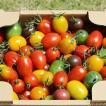 ミニトマトミックス1.8kg詰め(トマトの宝石箱) お取り寄せ野菜 ワンダーファーム