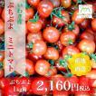 ミニトマト 贈答 ぷちぷよ 1kg箱 新食感 ワンダーファーム 産地直送 お取り寄せ野菜