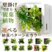 送料無料 壁掛けできる観葉植物 ミドリエ デザイン「フレーム」選べる!植栽パターン&カラー