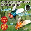 キモ楽しいリアル昆虫ラジコン 巨大昆蟲R/C(蠅ハエ・蜂ハチ)新品