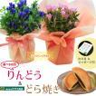 花色選べる:りんどう&どら焼きセット*ミニカエル付 鉢植え 鉢花 祝い 誕生日祝 御祝 プレゼントにも bonsai