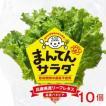 バタビア10個 まんてんサラダ やぶらぶウォーカー レタス 兵庫県養父市 無農薬 ベータカロテン ビタミン ミネラル ギフト のし