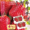 いちご 宮城県 GRA「ミガキイチゴ」 レギュラー 275g×4パック 送料込